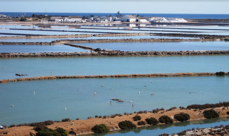 <span style='color:#780948'>ARCHIVED</span> - 1.8 million euros for 4-year birdlife conservation project in San Pedro del Pinatar