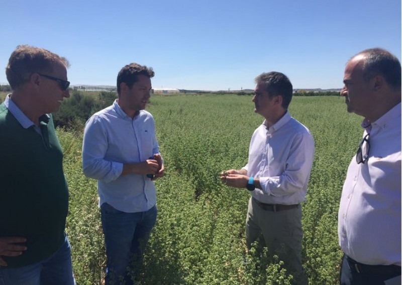 Aromatic and medicinal plant cultivation, another string to the bow of Murcia agriculture