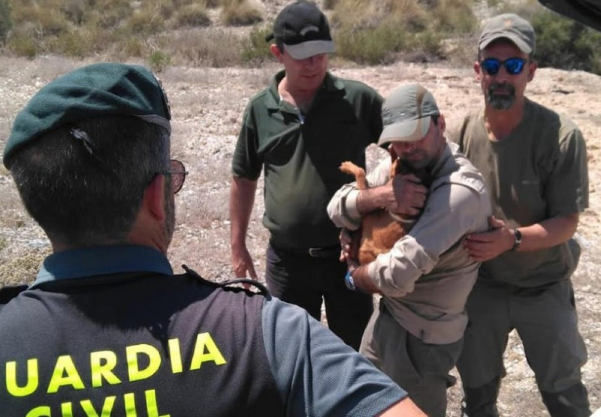 Dog rescued from 30-metre well in La Aljorra