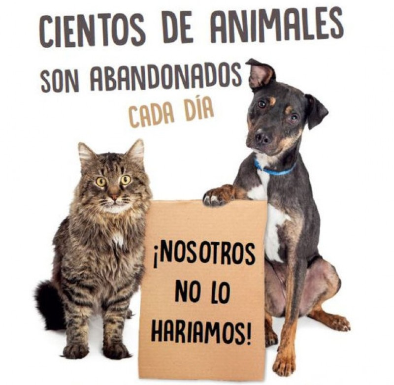 <span style='color:#780948'>ARCHIVED</span> - New campaign in Cartagena to counter summer pet abandonment