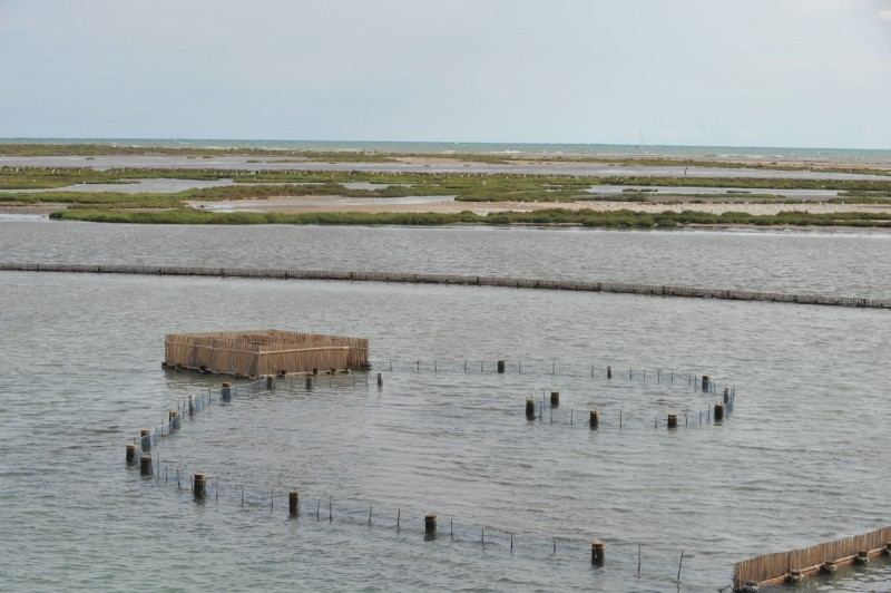 <span style='color:#780948'>ARCHIVED</span> - Encañizada traditional fishing restoration project advances in northern La Manga