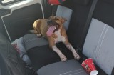 Cartagena police break into vehicle to rescue dehydrated dog