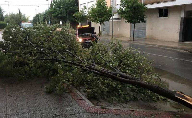 <span style='color:#780948'>ARCHIVED</span> - Heavy storms and hailstones threaten the grape harvest in north-west Murcia