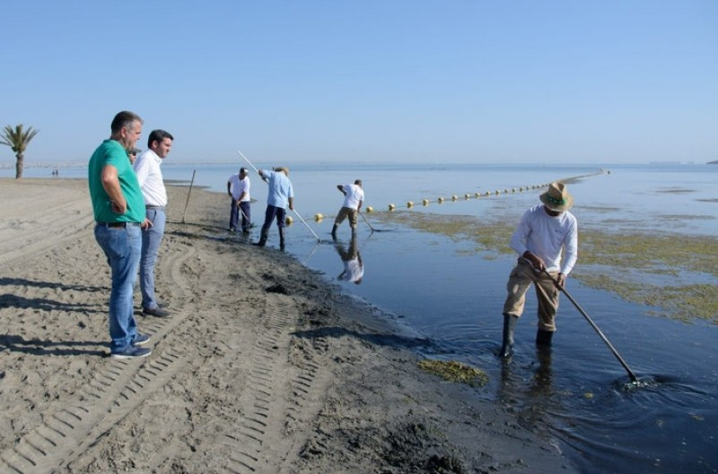 <span style='color:#780948'>ARCHIVED</span> - Seaweed removal team returns to Los Urrutias