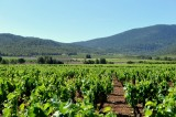 Thursday 11th October ENGLISH language Bullas Wine Tour (Bodegas Balcona)