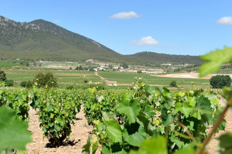 29th September family wine route tour and visit to Roman villa of Los Cantos Bullas