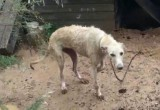 Alhama police rescue greyhound from appalling living conditions