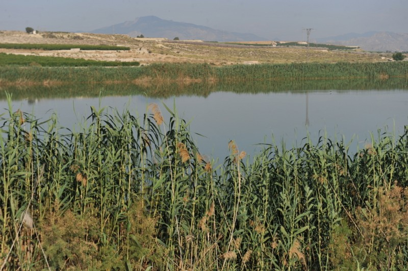 The protected wetlands of Lagunas de Campotejar in Molina de Segura