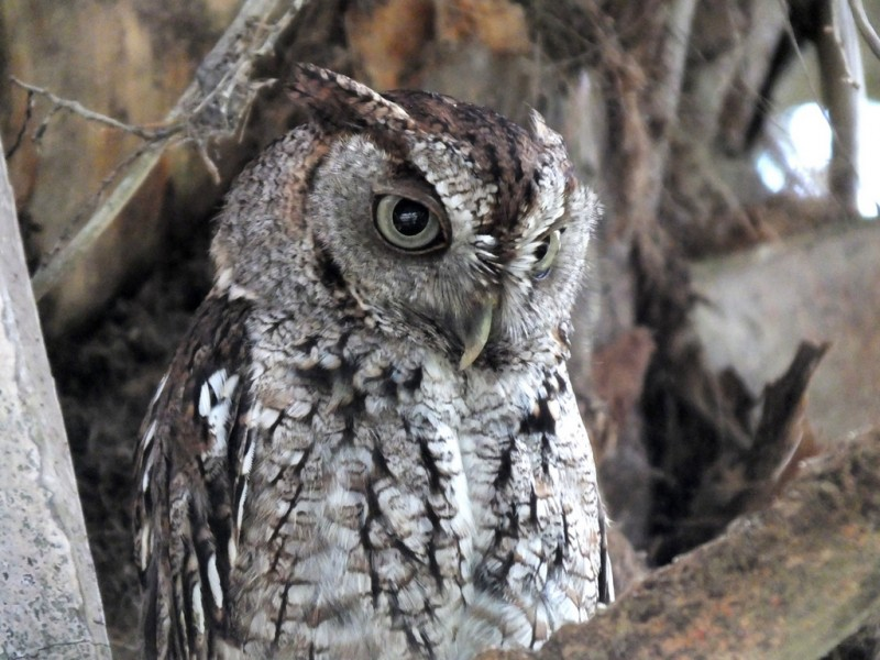 1st to 31st October, owl exhibition at the Sierra Espuña visitors' centre