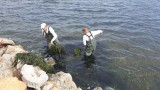 165 cubic metres removed from the shore of the Mar Menor in 2 weeks