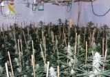 British man faces charges over marijuana plantation in his Cabo de Palos home