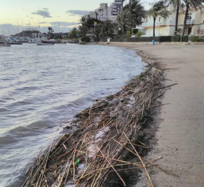 <span style='color:#780948'>ARCHIVED</span> - Clean-up of the Rambla del Albujón begins as canes and reeds pile up on Mar Menor beaches