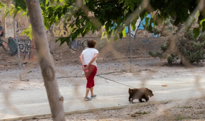 Owners to be charged 100 euros for abandoned and escaped pets picked up in Murcia