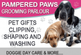 Pampered Paws dog grooming and Doggie day care covering the Camposol and Mazarrón areas.