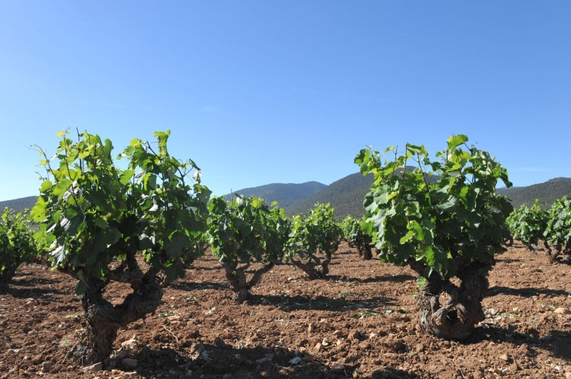 Friday 22nd February 2019 ENGLISH language guided Bullas wine tour (Bodegas Monastrell)