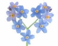 Forget-Me-Not Mazarron