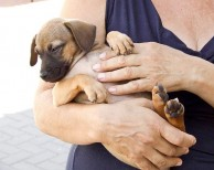 Little Starfish Dog Rescue Spain
