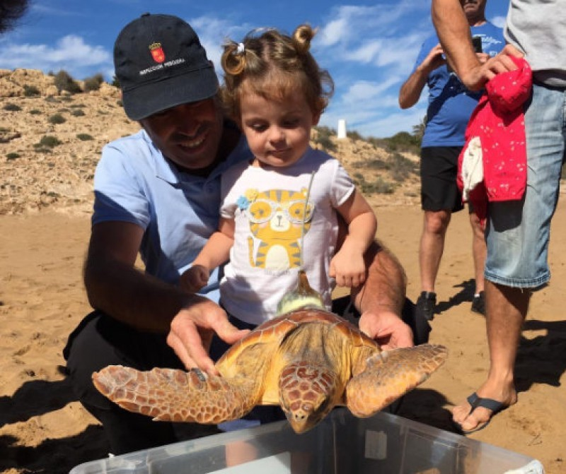 Loggerhead sea turtles rescued in Murcia tracked around the Mediterranean