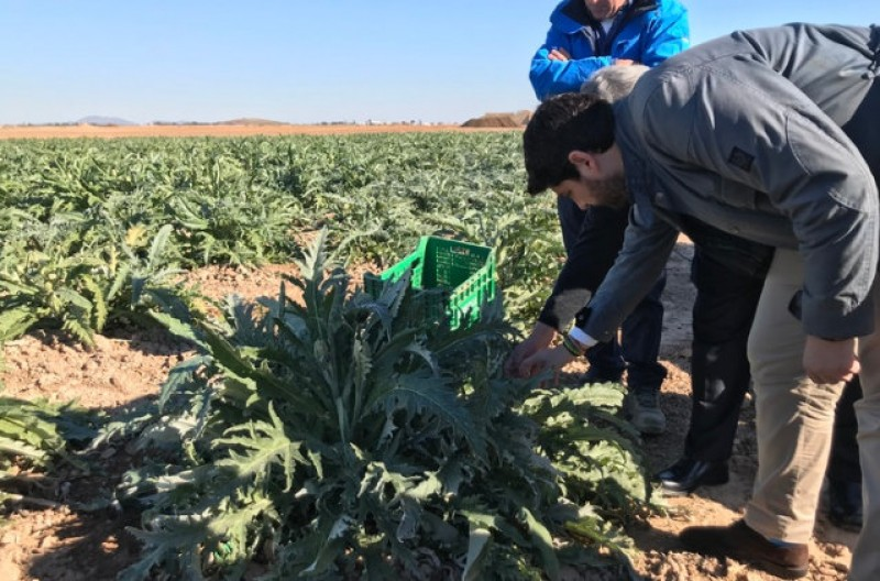 Frost damage to Murcia crops estimated at 2.5 million euros
