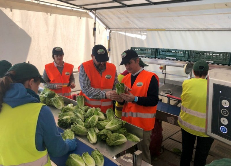 40 per cent of fresh Murcia vegetables are packaged in the fields