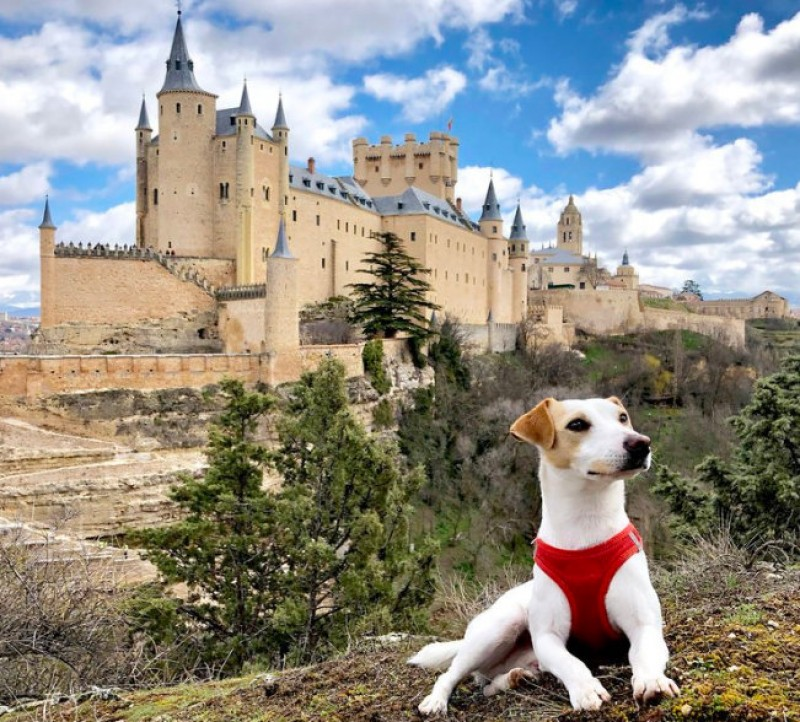 <span style='color:#780948'>ARCHIVED</span> - Spain's first canine influencer Pipper puts Spanish dog tourism in the spotlight