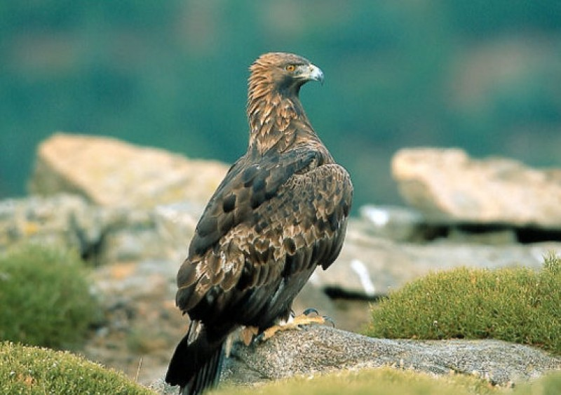 <span style='color:#780948'>ARCHIVED</span> - Parts of Sierra Espuña closed to the public for 6 months to protect golden eagles
