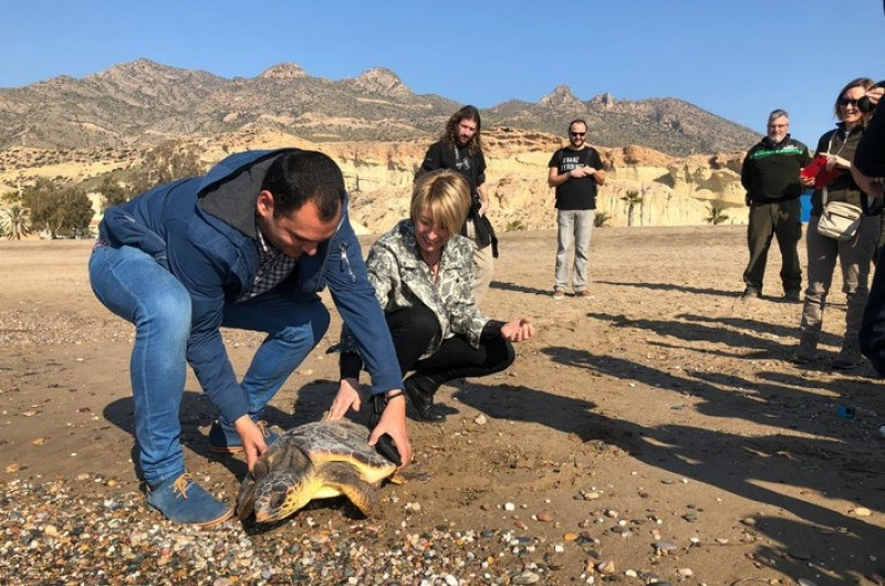 <span style='color:#780948'>ARCHIVED</span> - Loggerhead sea turtle released into the Mediterranean in Bolnuevo