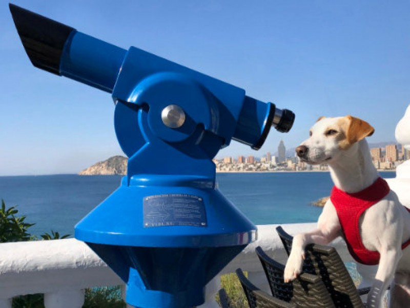 <span style='color:#780948'>ARCHIVED</span> - Pipper the canine influencer reaches the Costa Cálida on his tour of Spain