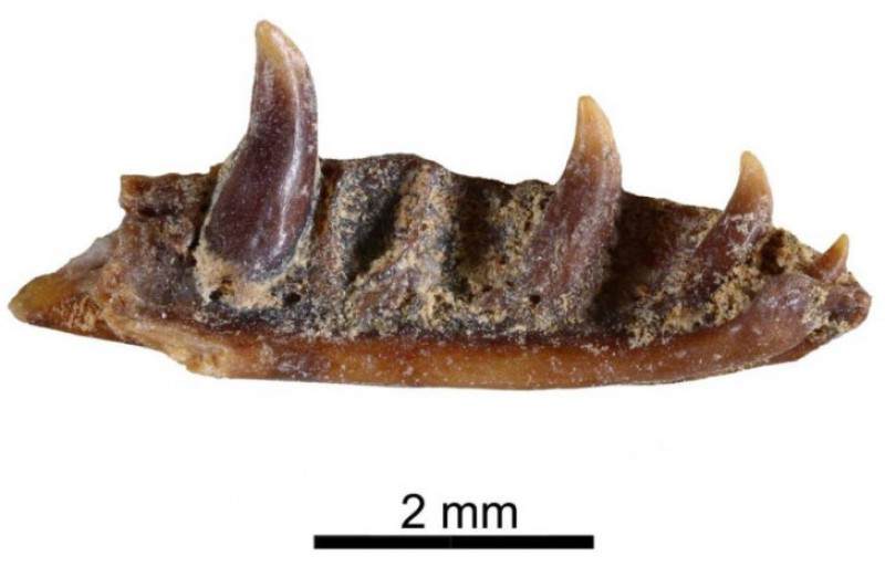 <span style='color:#780948'>ARCHIVED</span> - Fossilized remains of million-year-old lizard discovered in Abanilla