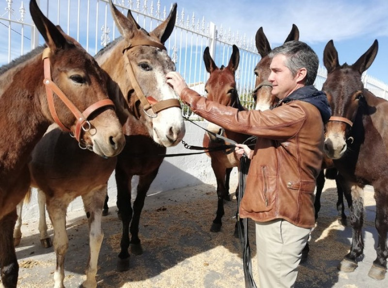 Lorca mules praised by NATO for German army role