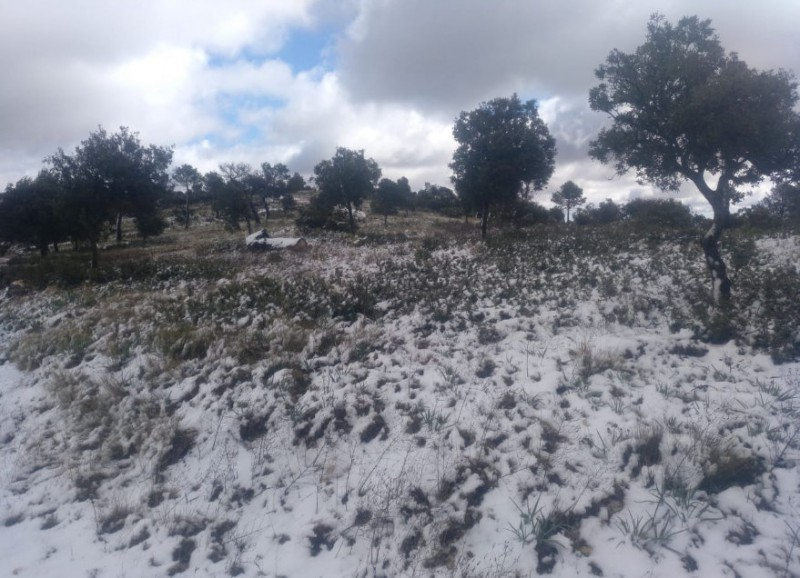 <span style='color:#780948'>ARCHIVED</span> - Snow in the north of Murcia on Sunday!