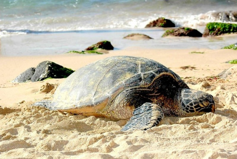 Dogs banned from Calblanque beaches to protect loggerhead sea turtles