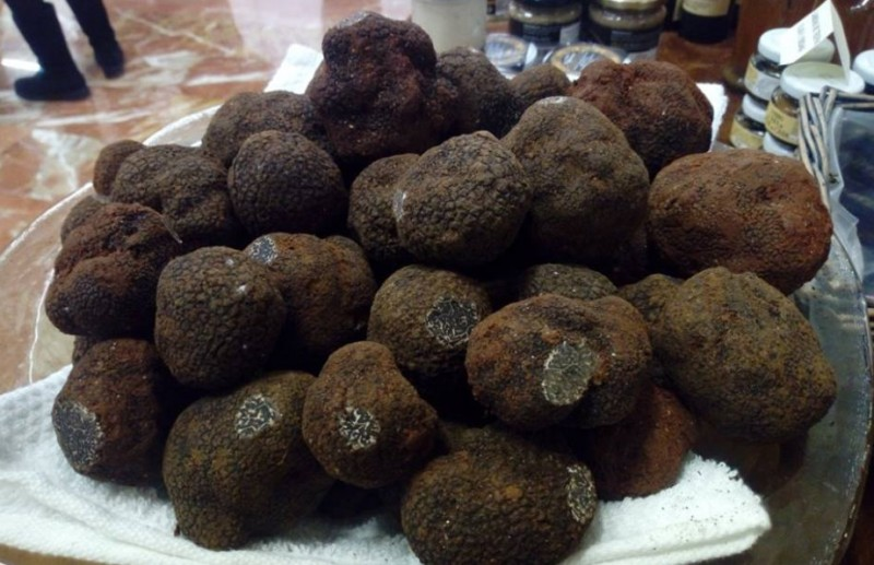 <span style='color:#780948'>ARCHIVED</span> - First black truffle harvest at experimental plot in Caravaca