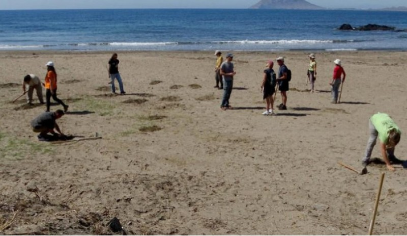 <span style='color:#780948'>ARCHIVED</span> - Native flora re-planted again at Lorca beaches as the war against vandals continues