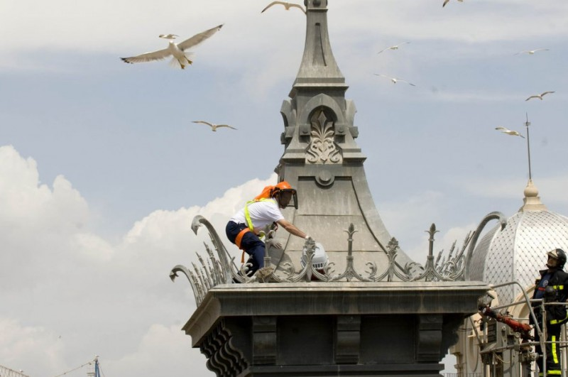 Annual seagull cull begins in Cartagena