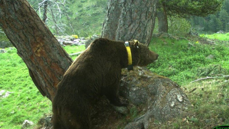 France and Spain hold summit over wild bear attacks in the Pyrenees
