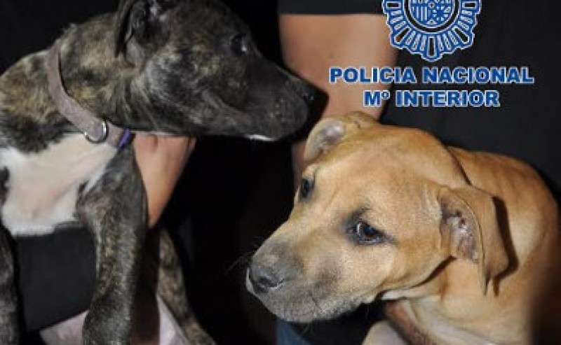 <span style='color:#780948'>ARCHIVED</span> - Fighting dog breeders and trainers in Murcia among 23 facing up to 780 years in jail
