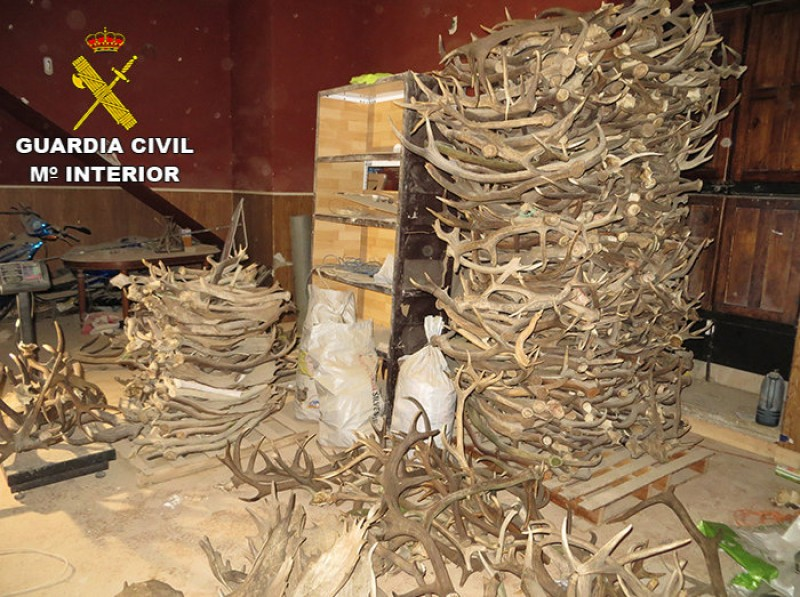 <span style='color:#780948'>ARCHIVED</span> - Illegal antler traders arrested in Jaén