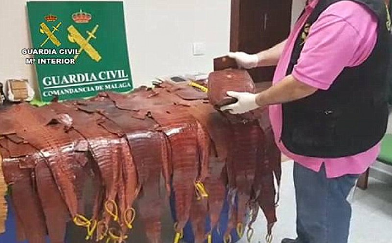 <span style='color:#780948'>ARCHIVED</span> - 627 live reptiles confiscated from illegal traders in Spain