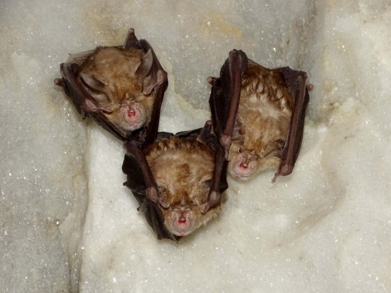 Naturalists purchase Bat Caves in Santomera