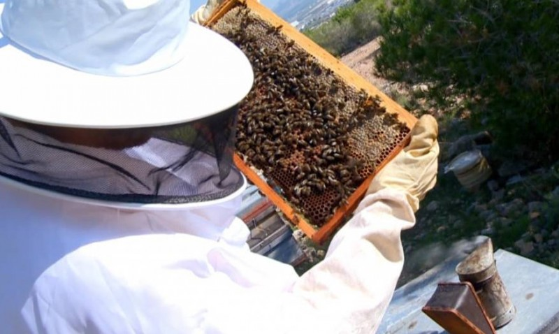 420,000-euro subsidy this year for Murcia beekeepers