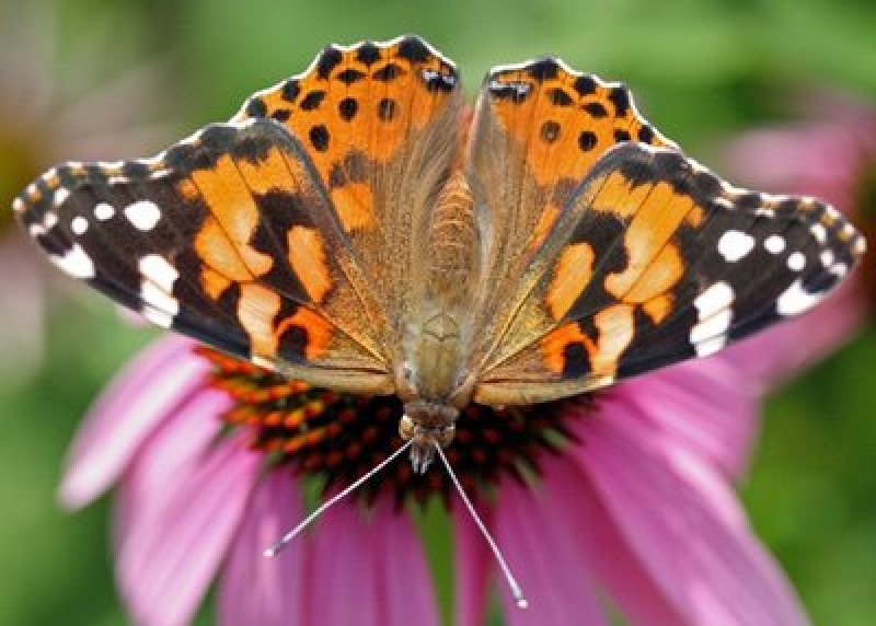 Lorca castle joins butterfly breeding ground network