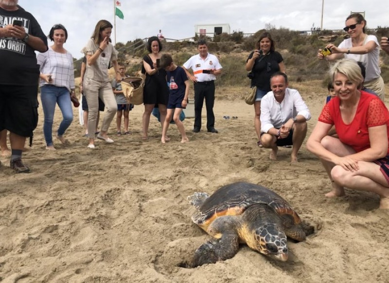 Loggerhead sea turtle re-released in Águilas after being found trapped in fishing line and plastic