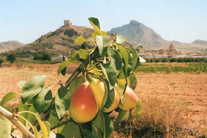 Pear orchards in Jumilla damaged by dry storms
