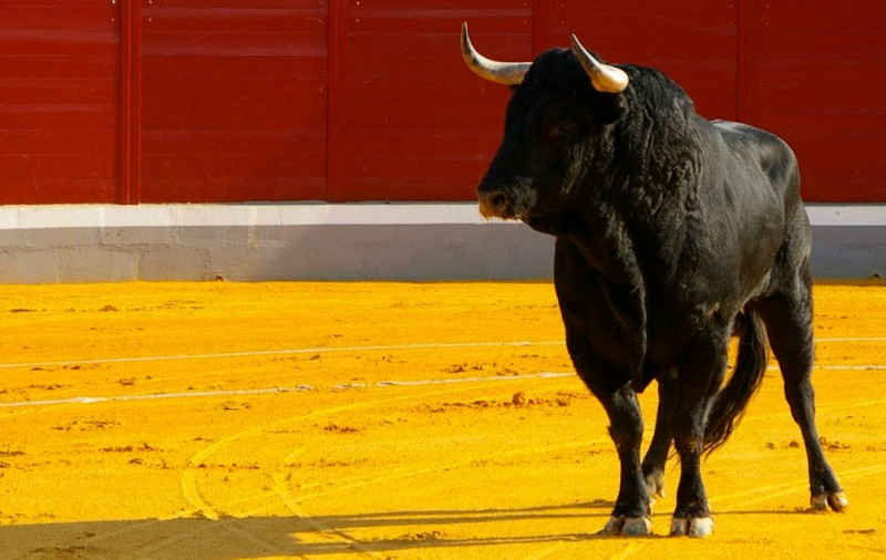 <span style='color:#780948'>ARCHIVED</span> - Mula votes against bull-related events in local fiestas