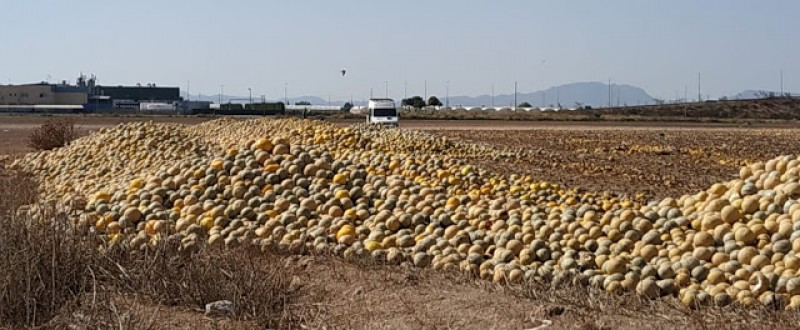 <span style='color:#780948'>ARCHIVED</span> - Platform group denounces over-farming as melons are left to rot in the Campo de Cartagena