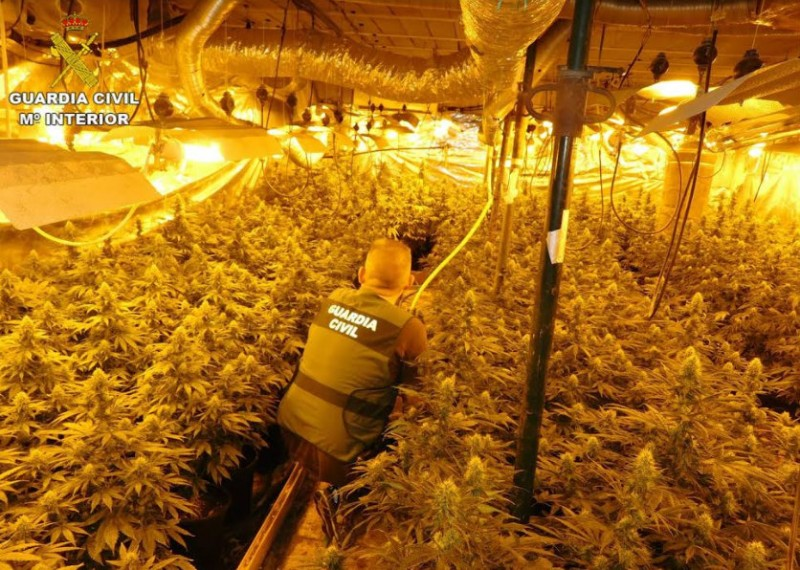 <span style='color:#780948'>ARCHIVED</span> - 7 arrested for marijuana cultivation and trafficking in Los Alcázares and Alicante