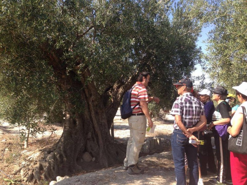 Saturday 19th October FREE guided tour of Abanilla Olive oil mill