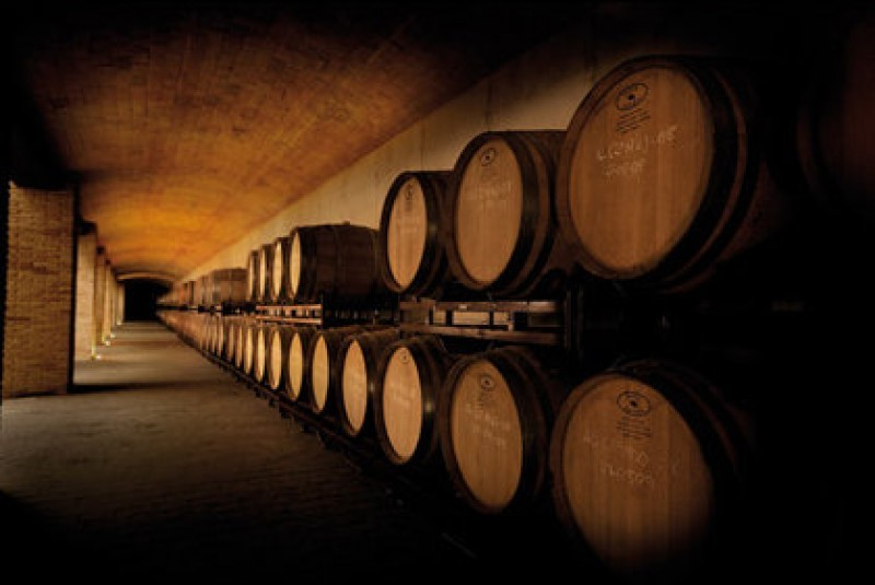 Friday 6th September ENGLISH guided wine tour visiting Bodegas Luzón in Jumilla