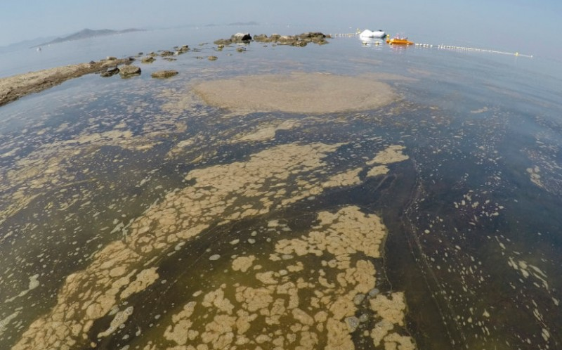 <span style='color:#780948'>ARCHIVED</span> - Scientists warn that the ecosystem of the Mar Menor is a long way from recovering